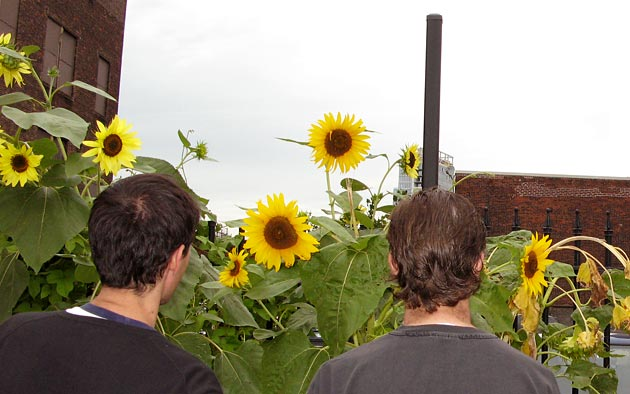 photo of men and sunflowers
